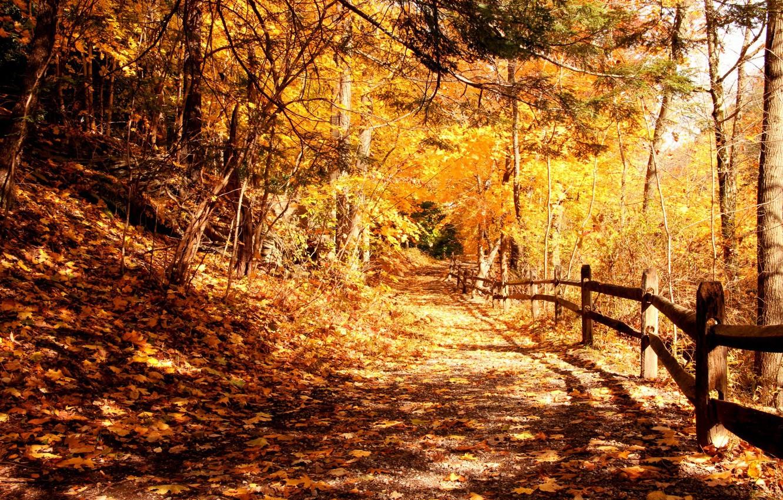 Фото обои свет, деревья, парк, листва, Осень, ограда