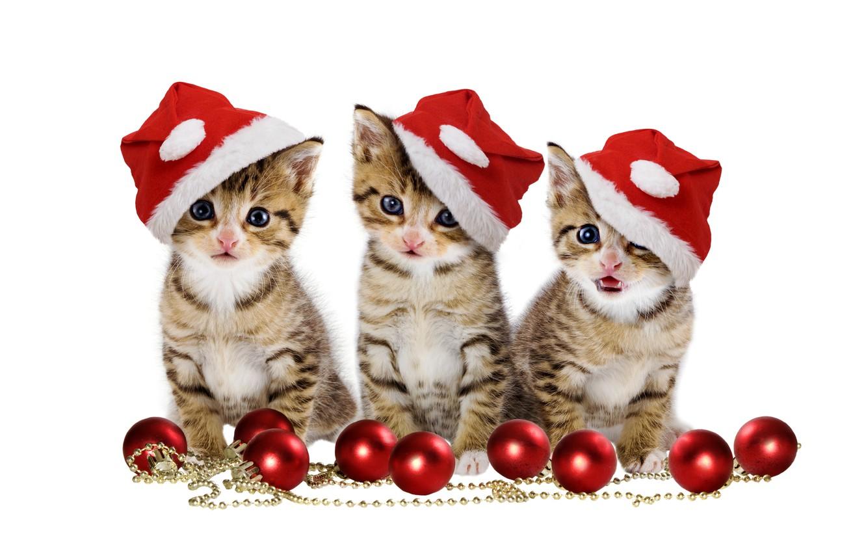 Фото обои christmas, magic, balls, hat, kitten, eyes, cat, beautiful, pretty, beauty, kitty, merry christmas, sweet, cats, …