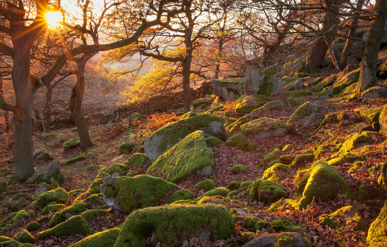 Фото обои осень, лес, лучи, деревья, закат, камни, Англия, склон, национальный парк, Пик-Дистрикт