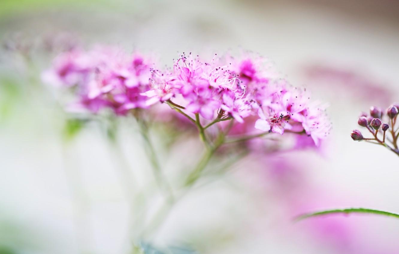 Фото обои макро, цветы, размытость