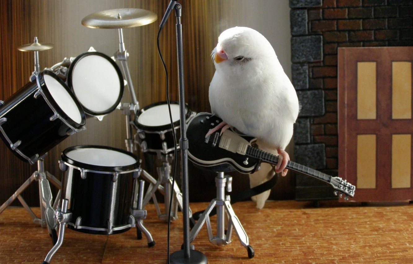 Фото обои music, white, animals, bird, parrot, band, nice