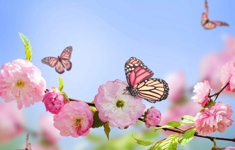 Фото обои бабочки, розовый, весна, цветение, sky, blue, pink, blossom, flowers, spring, голубое небо, butterflies