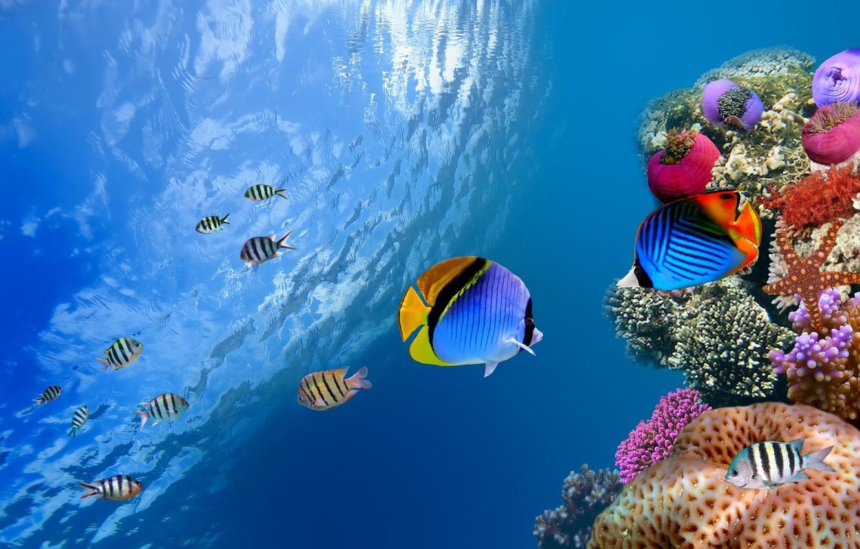 Фото обои море, океан, рыба, underwater, sea, ocean, fish, коралл, од водой, coral