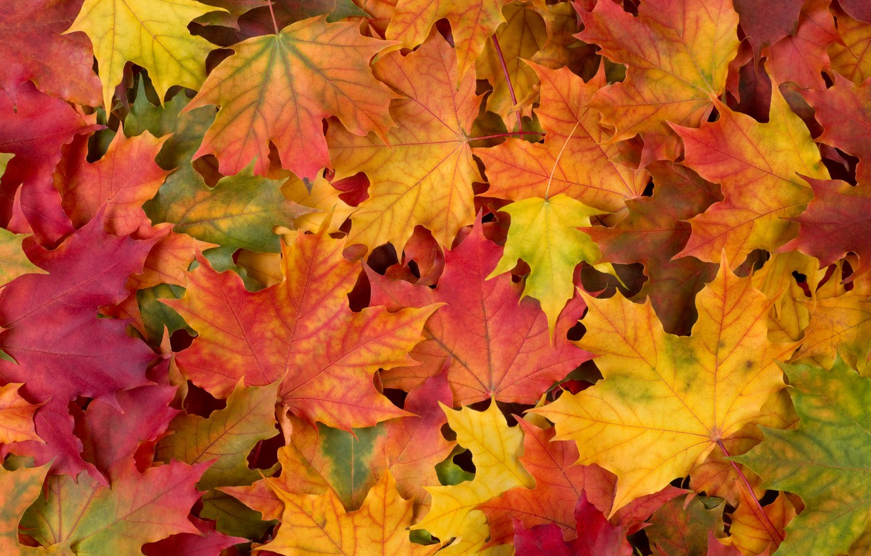 Фото обои autumn, leaves, осенние листья
