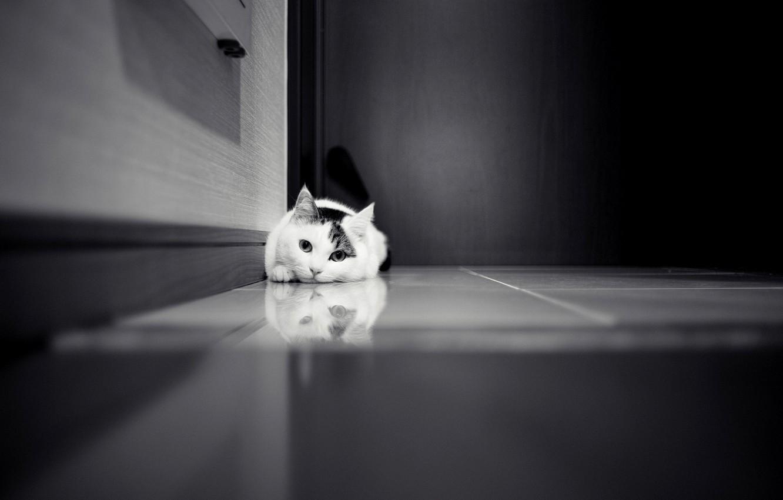 Фото обои кошка, кот, дверь, кафель, черно-белое, белая, шкаф