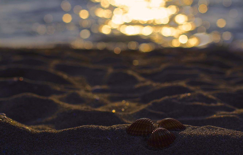 Фото обои песок, пляж, блики, три, ракушки, боке