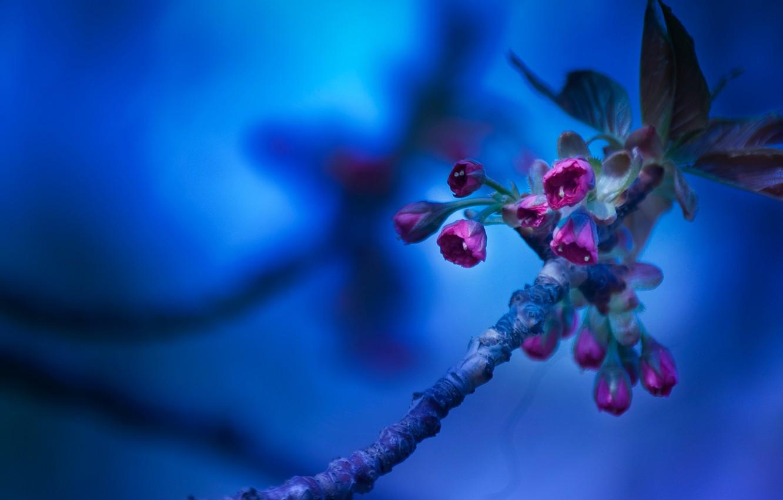 Фото обои макро, цветы, фон, ветка, синй