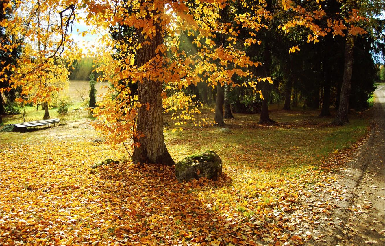 Фото обои листья, деревья, природа, парк, фото, Осень, тропинка