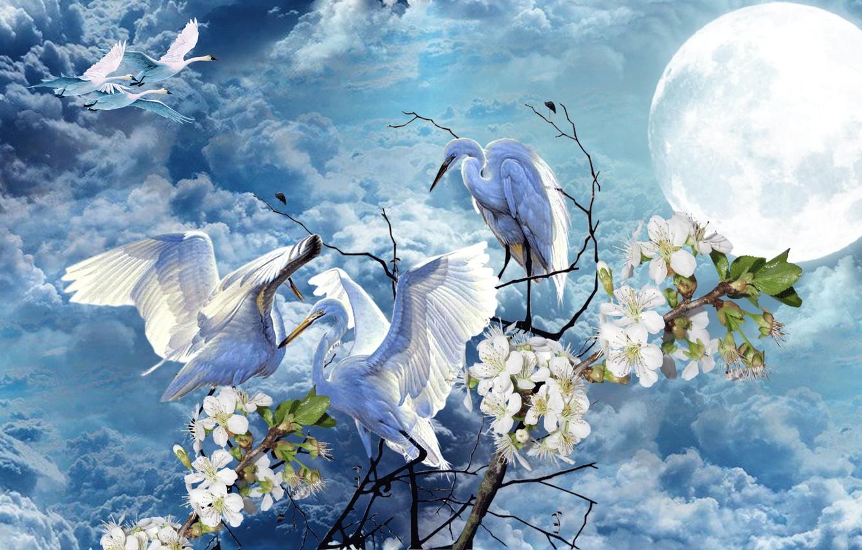Фото обои небо, цветы, луна, Весна, лебеди, аисты