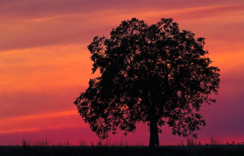 Картинки дерево на закате