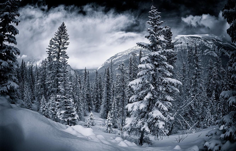 чем приступить черная зима картинки яркие светящиеся витрины