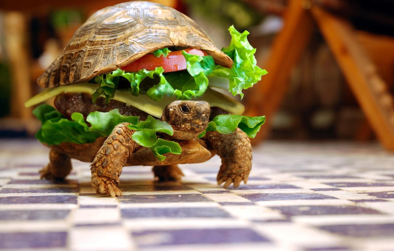 Фото обои животные, черепаха, юмор, бутерброд, овощи