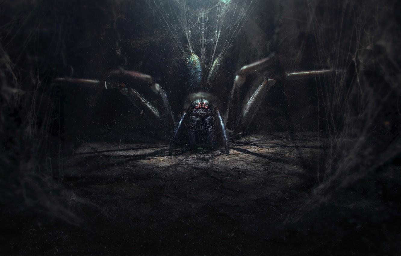 Фото обои мрак, паутина, паук, spider, арт