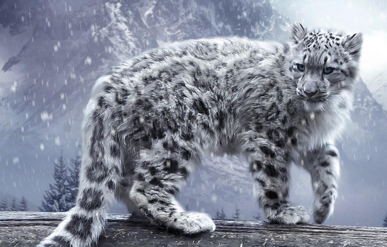 Фото обои кошка, снег, горы, леопард, ирбис, бревно, барс