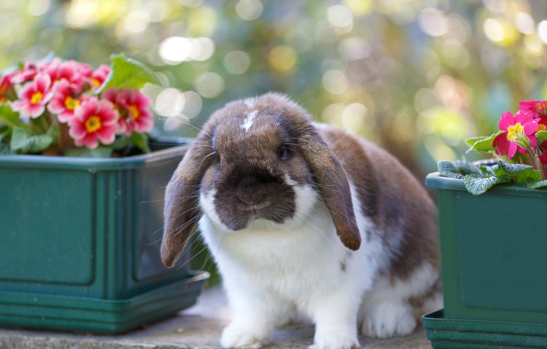 екатерина кролик красивые фото поздравляем гвинет