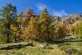 Картинка деревья, горы, Пьемонт, Италия, осень