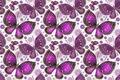 Картинка бабочки, узор, крылья