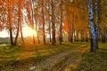 Картинка природа, дорога, солнце, желтые листья, закат, осень, пейзаж, березы