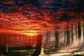 Картинка лес, небо, природа