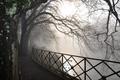 Картинка туман, природа, ветви, дорога, деревья, река, лес