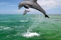 Картинка Дельфины, море, брызги