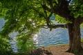 Картинка лето, блики, река, дерево