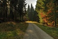 Картинка утро, morning, Осень, forest, autumn, path, Сентябрь, September, дорожка, лес