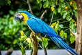 Картинка цвета, перья, ара, птица, клюв, попугай, профиль