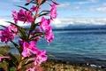 Картинка цветы, красота, горы, природа, море, душа, солнце, небо