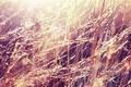 Картинка роса, утро, трава, свет, капли
