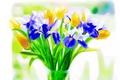 Картинка цветы, тюльпан, букет, ирис