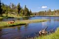 Картинка лес, природа, река, олень
