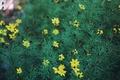 Картинка цветы, макро, природа