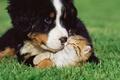 Картинка трава, котенок, собака, дружба