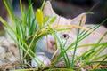Картинка кошка, трава, котёнок