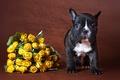 Картинка собака, цветы, фон