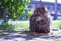 Картинка кошка, плитка, крупный план, природа