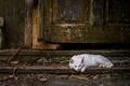 Картинка белый, кот, дверь