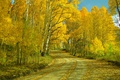 Картинка дорога, осень, пейзаж, листья