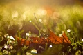 Картинка осень, трава, капли, макро, лист, блики