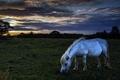 Картинка конь, ночь, поле, природа