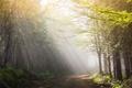 Картинка утро, пейзаж, свет, дорога
