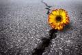 Картинка трещина, цветок, дорога, асфальт