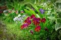 Картинка цветы, трава, лепестки, поле, луг
