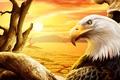 Картинка Орел, пустыня, солнце, рисунок