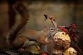 Картинка ягоды, гриб, белка, голод
