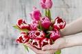Картинка руки, тюльпаны, flowers, tulips, spring