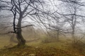 Картинка туман, дерево, пейзаж, природа