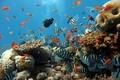 Картинка Рыбы, море, океан, кораллы, рыбки, аквариум, рыбалка