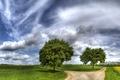 Картинка дорога, деревья, трава, небо, облака